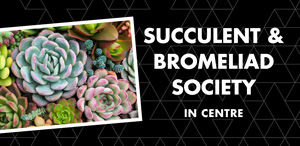 SPP-Website-Promos---Bromiliad7